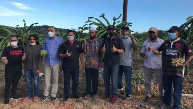 Photo of Ikut Panen Buah Naga, Muhammad Samsun pulang dibekali Proposal oleh Petani